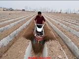 土豆( 马铃薯)开沟培土机